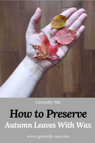 How to Preserve Autumn Leaves With Wax