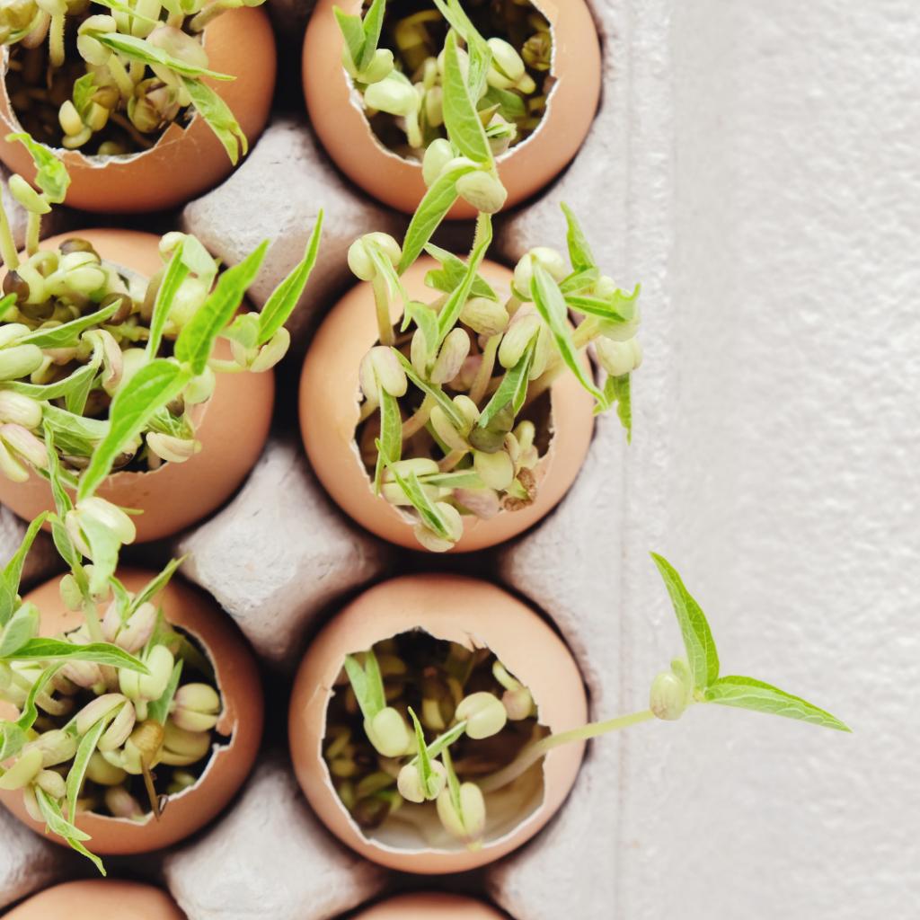 The Best Zero Waste Gardening Tips
