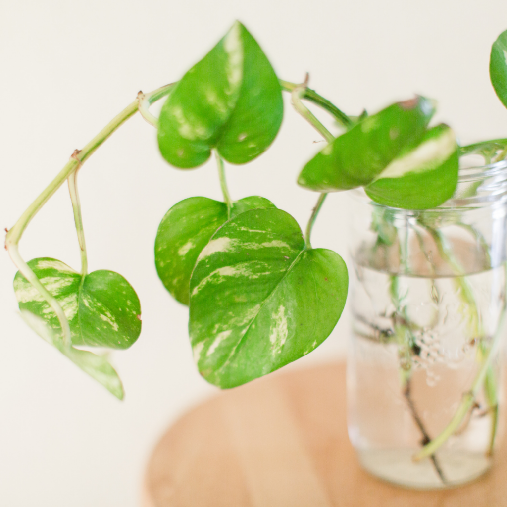 10 Ways to Have an Eco-Friendly Apartment